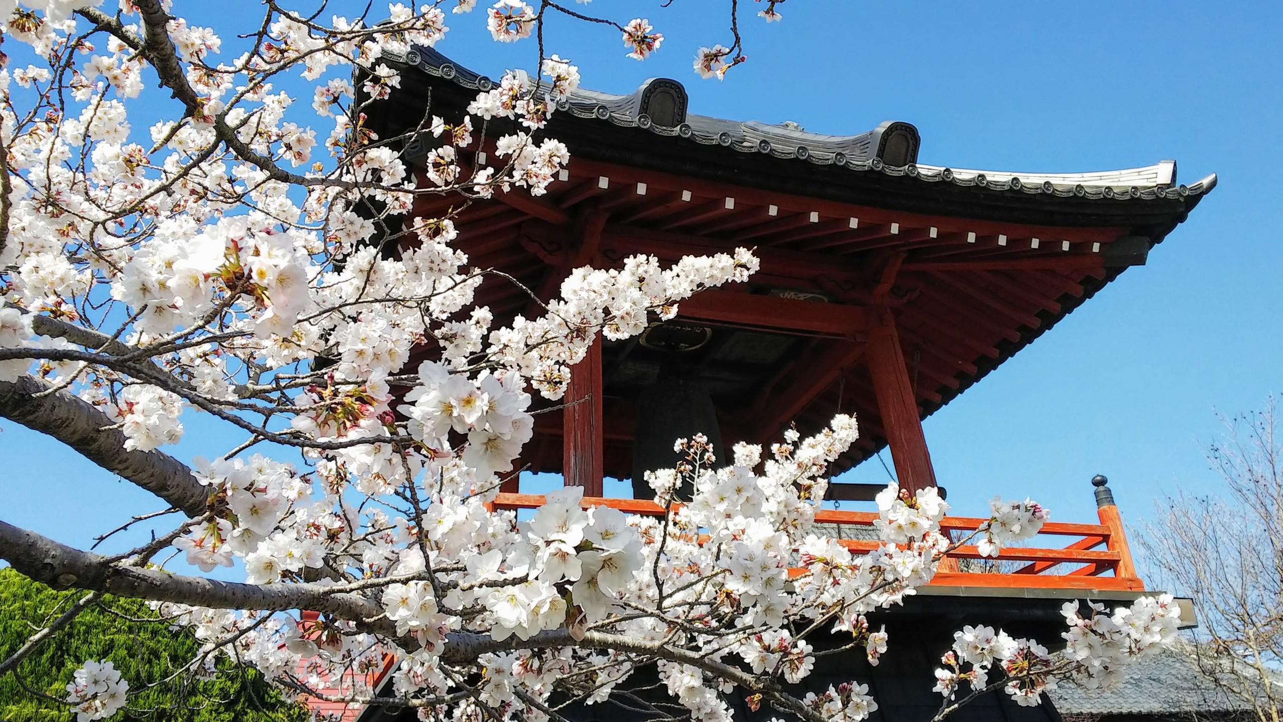 桜が楽しみです!